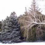 Pesadelos de uma Noite de Inverno - Parte I